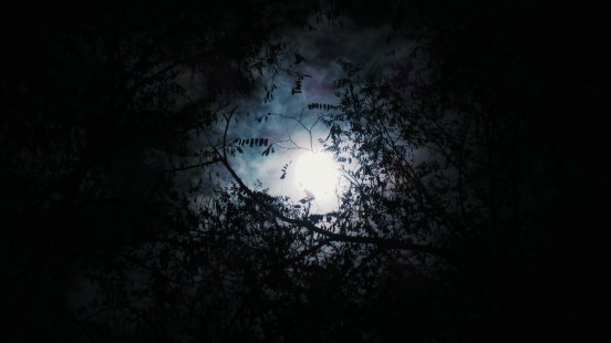 Moon through the Trees.jpg